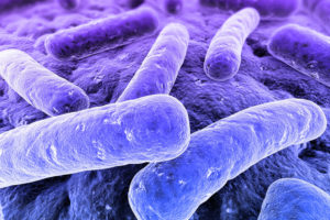 Wat is Legionella Pneumophila?