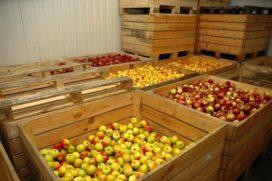 'Afbouw HFK's brengt voedselzekerheid in gevaar'