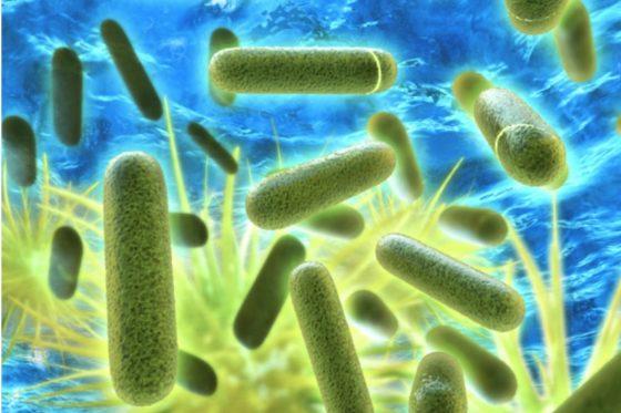 Legionella voorkomen: waar gaat het fout?