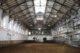 Nieuwsgierige paarden volgen renovatie Hollandsche Manege
